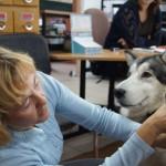 Praca z psem